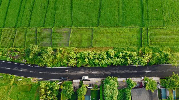Tự ý xây nhà ở trên đất trồng lúa